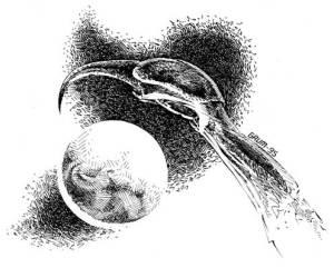 Basilisk Claw
