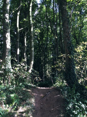 It may just look like a bump in the path, but it's actually an Iron Age rampart - Fox Wood, Nottinghamshire.